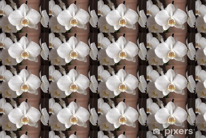Vinylová tapeta na míru Bílá orchidej - Květiny
