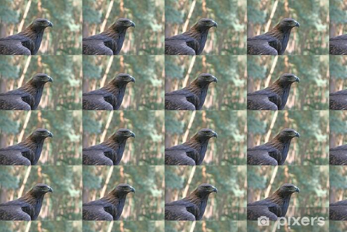 Vinyltapete nach Maß Steinadler - Vögel