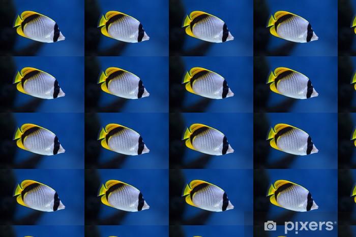 Tapeta na wymiar winylowa Ryby Chaetodon lineolatus - Zwierzęta żyjące pod wodą