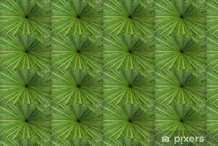 Vinyl behang, op maat gemaakt Palmfarn - Planten