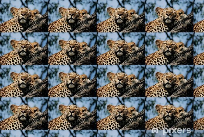 Tapeta na wymiar winylowa Spanie Leopard - Afryka