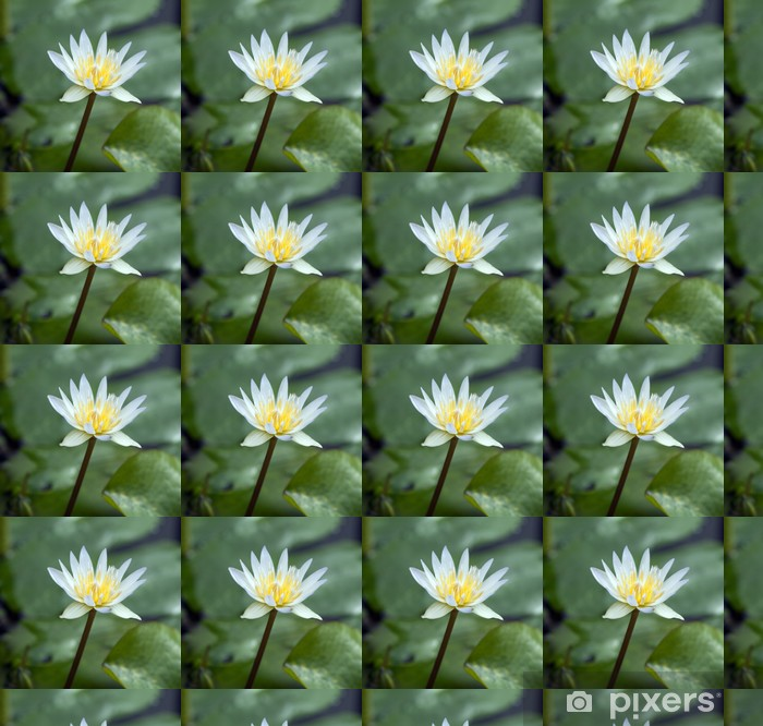 Papier peint vinyle sur mesure Seerose; Nymphaea x daubenyana - Fleurs