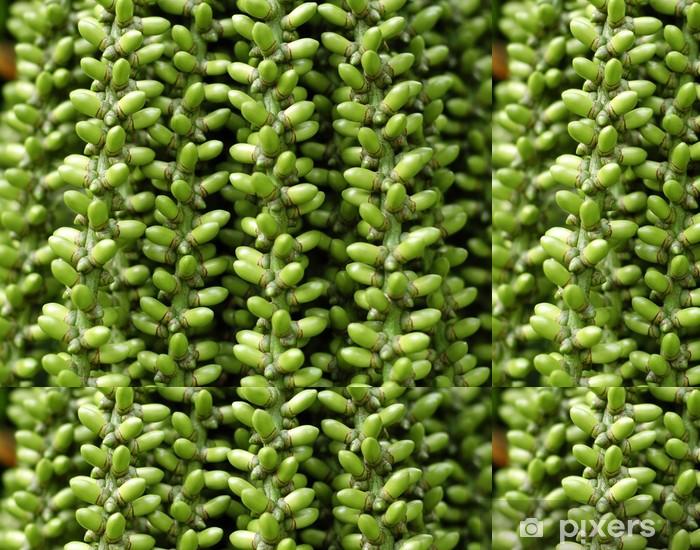 tropical queen palm fruit close-up Vinyl Wallpaper - Agriculture