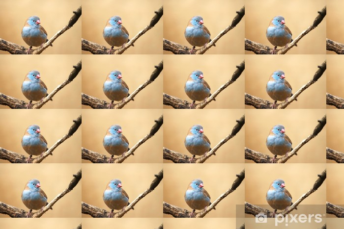 Vinyltapete nach Maß Astrild blau - Vögel