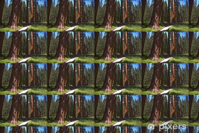 Vinyltapete nach Maß Sequoia National Park, Mammutbäume in der Umgebung Riesendorf - Amerika