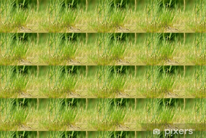 Papier peint vinyle sur mesure Herbe paysage - Plantes