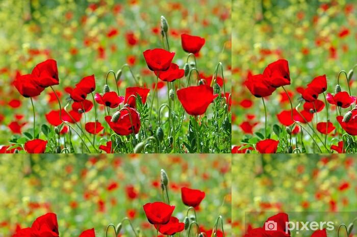 Tapete Bereich Der Bluhenden Mohn Blumen Fruhjahr Saison