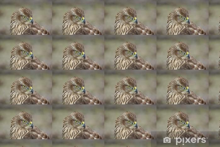 Tapeta na wymiar winylowa Jastrząb gołębiarz - Ptaki