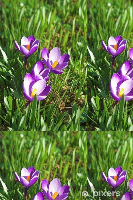 Vinil Duvar Kağıdı Krokusse - Çiçekler