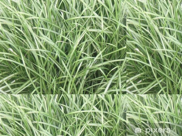 Tapete Hohes Gras Im Sommer Pixers Wir Leben Um Zu Verändern