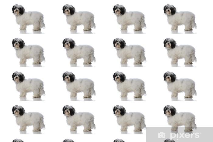 Vinyltapete nach Maß Havanese dog - Säugetiere