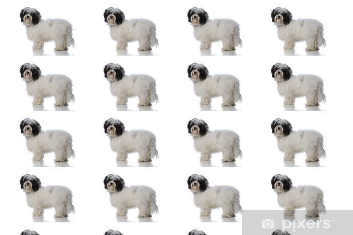 havanese dog Vinyl custom-made wallpaper - Mammals