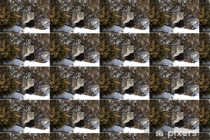 Tapeta na wymiar winylowa Bobcat _MG_7232 - Ssaki