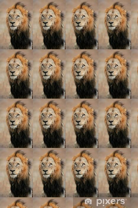 Tapeta na wymiar winylowa Duży samiec lwa afrykańskiego (Panthera leo), Republika Południowej Afryki - Ssaki