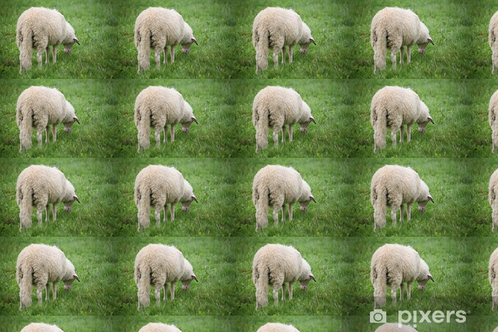 Tapeta na wymiar winylowa Long-tail owiec - Ssaki