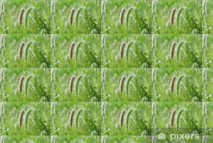 Vinyl behang, op maat gemaakt Tros gras - Planten