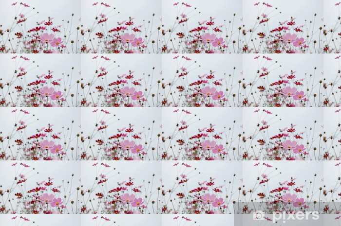 Tapeta na wymiar winylowa Calliopsis - Kwiaty