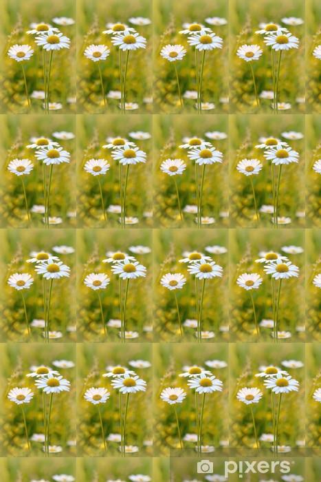 Tapeta na wymiar winylowa Stokrotki na łące o zachodzie słońca w lecie - Kwiaty