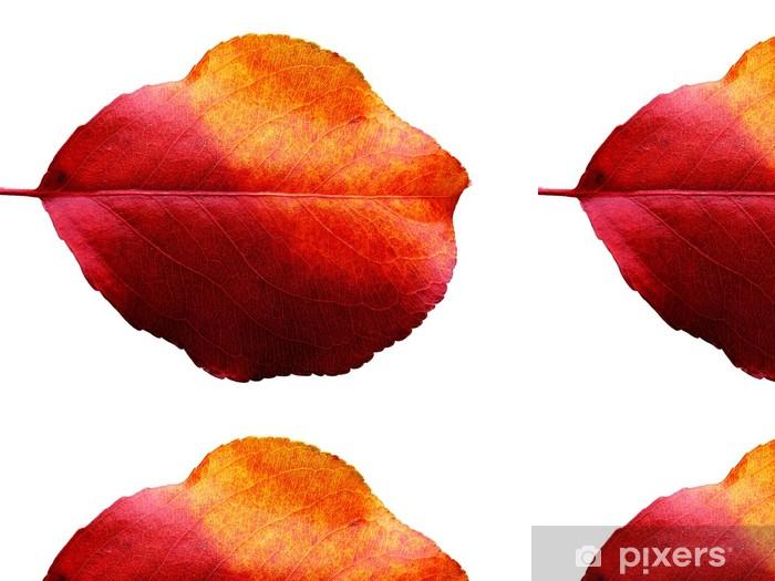 Tapete Zweifarbigen Herbstblatt Pixers Wir Leben Um Zu Verandern