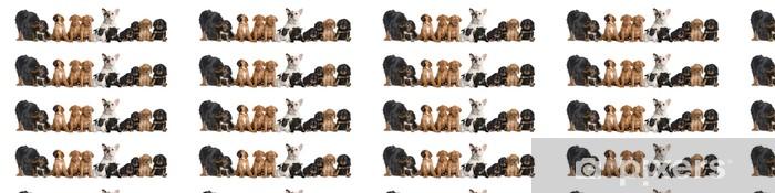 Papier peint vinyle sur mesure Groupe de chiens assis en face de fond blanc, tourné en studio - Mammifères