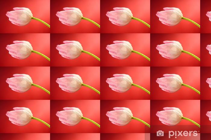Tapeta na wymiar winylowa Tulipany - Kwiaty