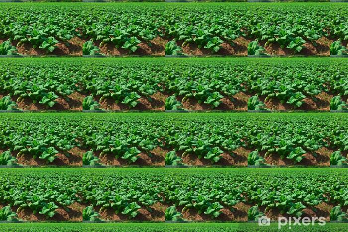 Tapeta na wymiar winylowa Sadzenie tytoniu w północnej Tajlandii - Dom i ogród
