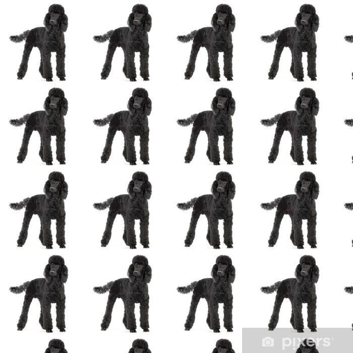 Papel pintado estándar a medida Caniche negro real - Mamíferos