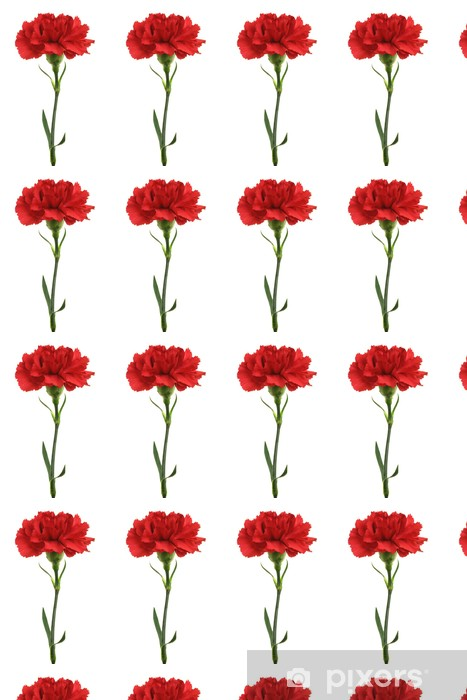 Vinylová tapeta na míru Dianthus caryophyllus (karafiát) - Květiny