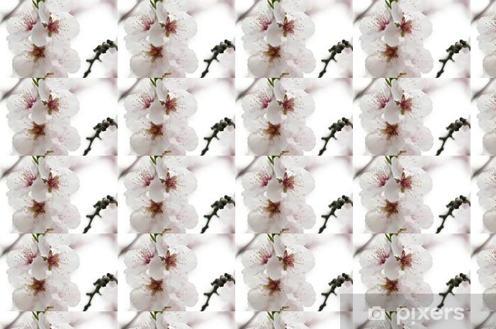 Vinyltapete nach Maß Kirschblüten_6 - Jahreszeiten