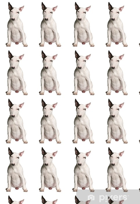 Bull terrier, 9 months old, sitting in front of white background Vinyl custom-made wallpaper - Mammals