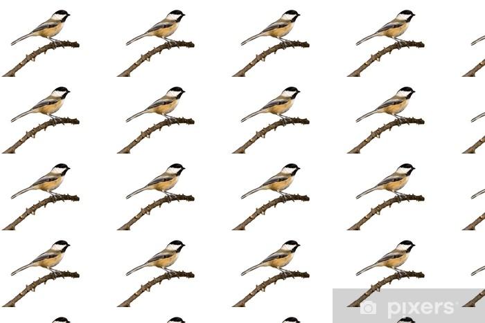 Papier peint vinyle sur mesure Mésange à tête noire perché sur une branche se prépare pour le vol - Oiseaux