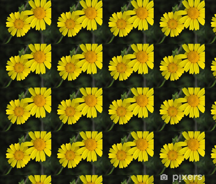 Papier peint vinyle sur mesure Marguerites jaunes - Bonheur