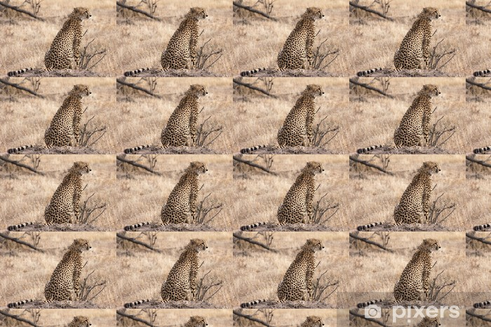 Vinylová tapeta na míru Gepard na pozoru - Afrika