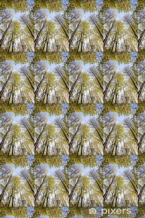 Tapeta na wymiar winylowa Korona drzewa z kolorowych liści - Pory roku