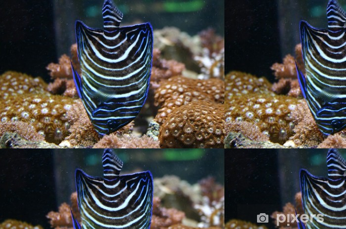 Papier Peint à Motifs Vinyle Poisson ange bleu - Animaux marins