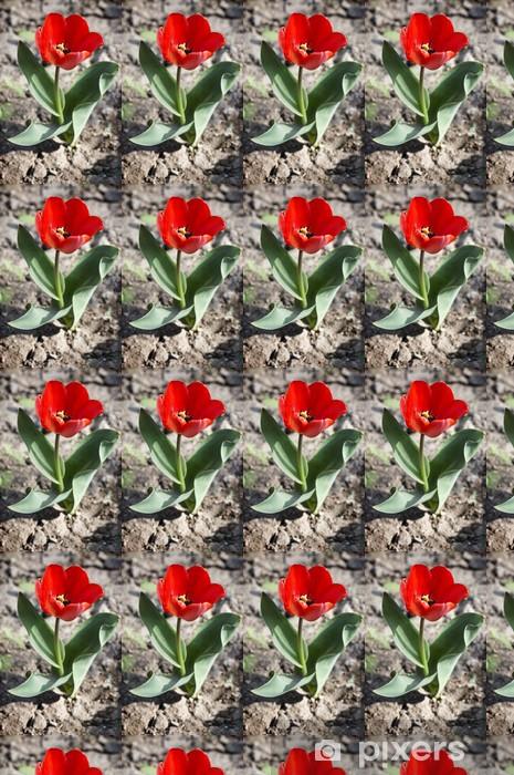Vinyltapete nach Maß Kleine Tulpe sprießen in leeres Feld - Blumen