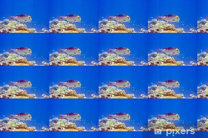 Vinylová tapeta na míru Indický oceán. Ryby. Ve korálů. - Témata