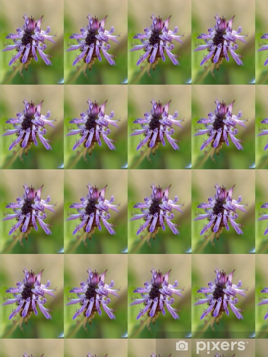 Coleus Canina Flower Wallpaper Pixers We Live To Change