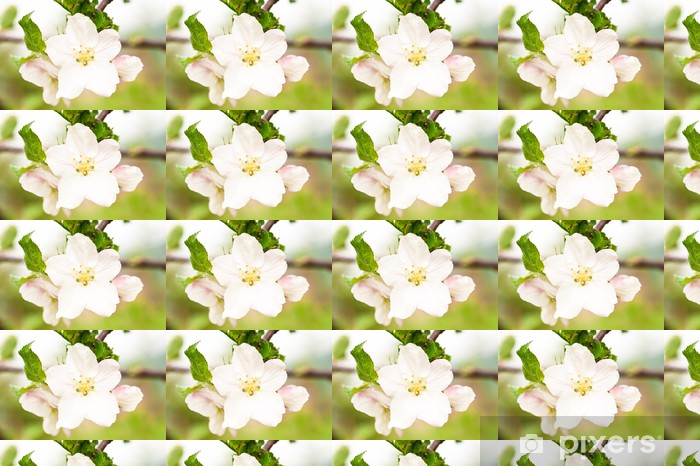 Vinyltapete nach Maß Apfelbaum Blume Großansicht - Haus und Garten