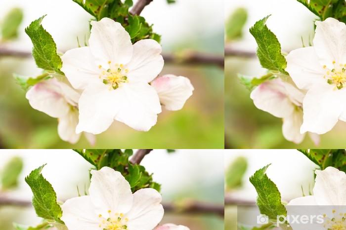 Papier peint à motifs vinyle Apple tree flower closeup - Maisons et jardins