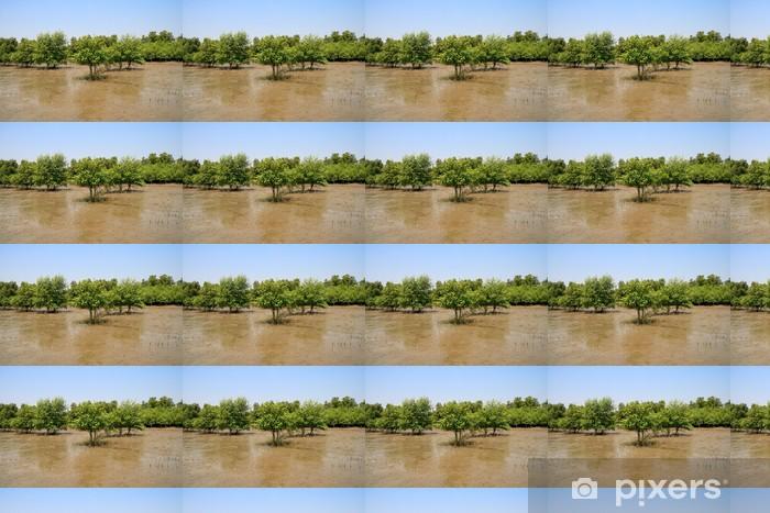 Vinylová tapeta na míru Mangrovových lesů - Lesy