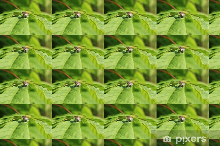 beetle © Vinyl custom-made wallpaper - Other Other