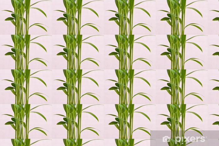 Fresh bamboo plant Vinyl custom-made wallpaper - Seasons
