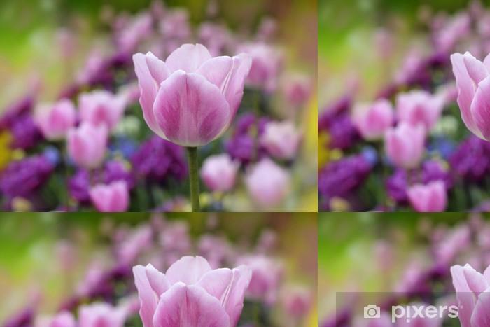 Vinylová Tapeta Tulipány - Roční období