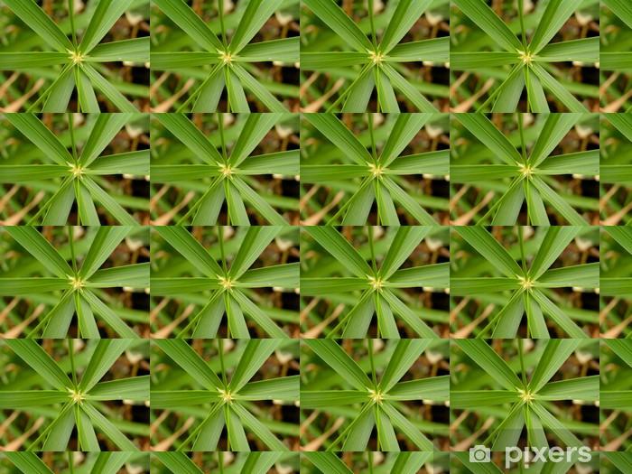 Tapeta na wymiar winylowa Cyperus papirus - Rośliny