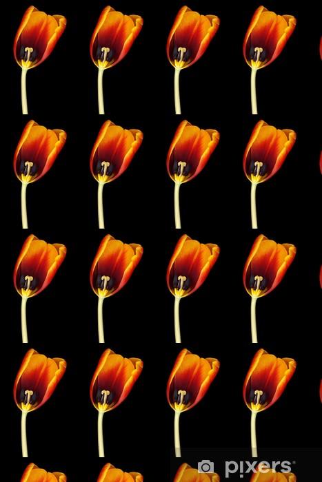 Tapeta na wymiar winylowa Dutch tullip samodzielnie na czarnym tle - Kwiaty