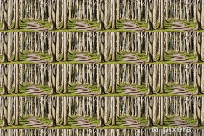 Tapeta na wymiar winylowa Pnie drzew w słońcu - Europa
