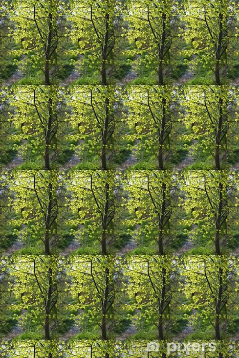 Papier peint vinyle sur mesure Chemin forestier avec tilleul rétro-éclairé - Forêt