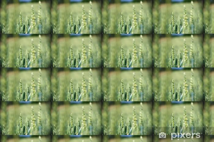Tapeta na wymiar winylowa Świeże zielone zboże na polu kukurydzy z błękitne niebo jako tło - Pory roku