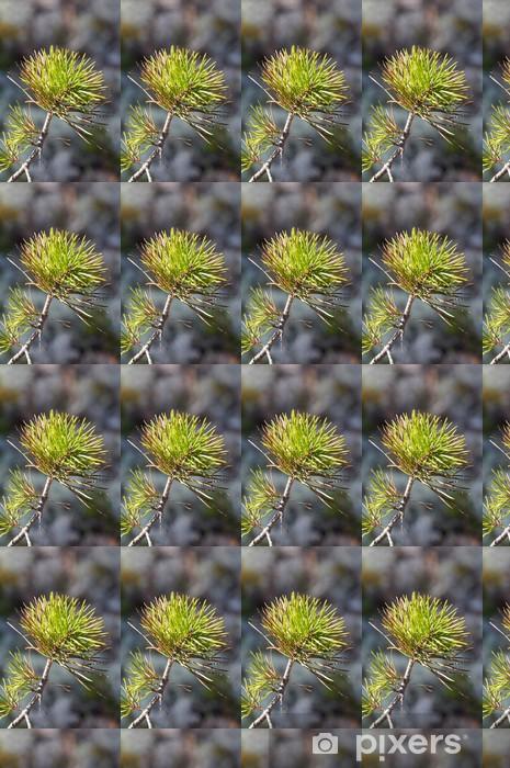 branch of pine Vinyl custom-made wallpaper - Trees